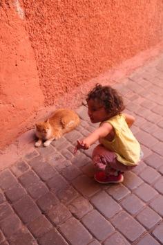 Amani meets the medina cat